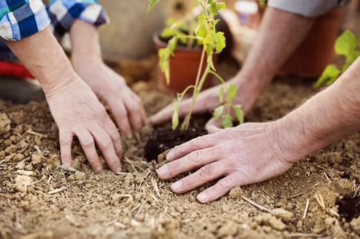 Le origini dell'agricoltura sociale