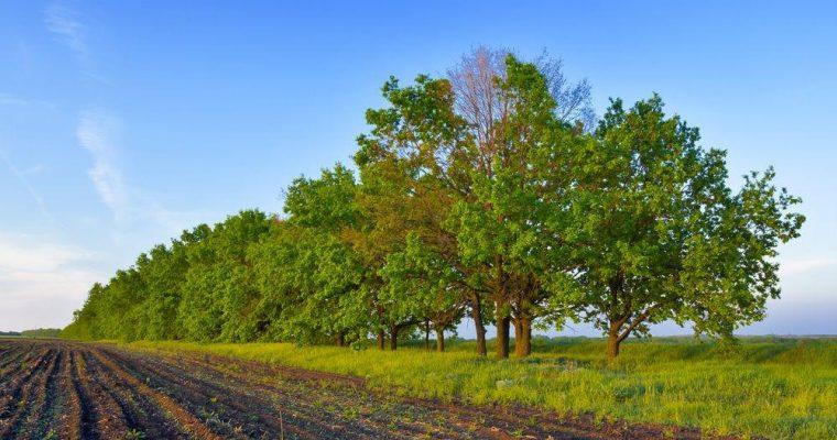 Cos'è l'agricoltura blu?